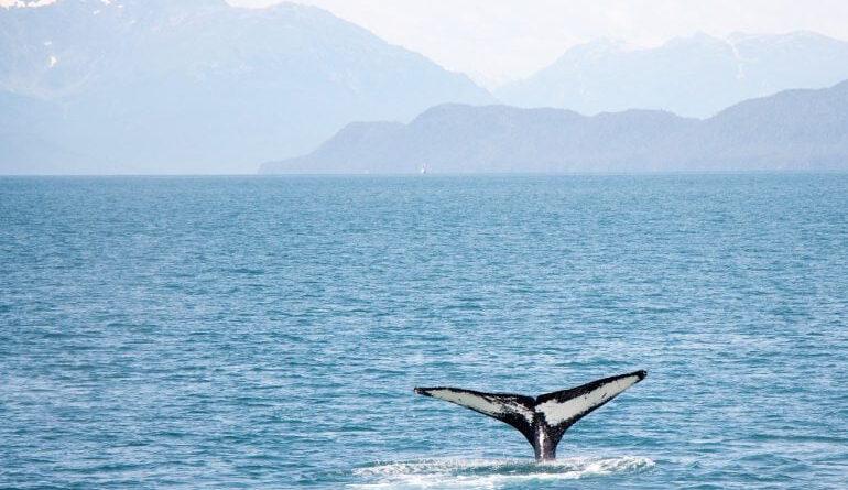 Eteryum Balinaları, Ekim 2020'den Bu yana Biriken ETH'yi Hâlâ Elinde Tutuyor Eteryum